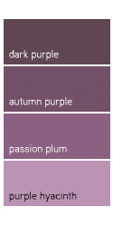 Plum shades like Autumn Purple make great accent colors.