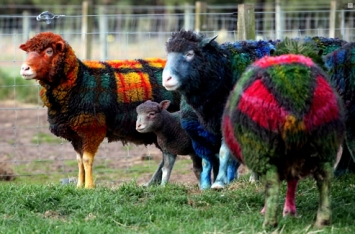 plaid_sheep