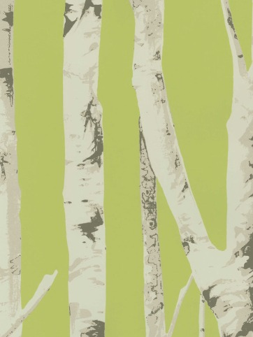 Birch tree wallcovering