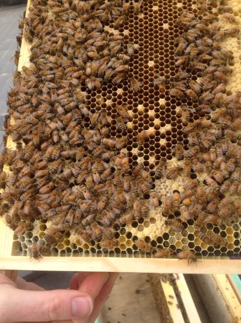 bees May 2015