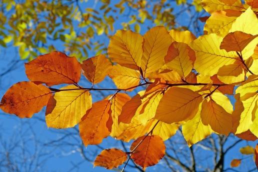 foliage-539413_1920
